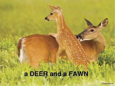 a DEER and a FAWN