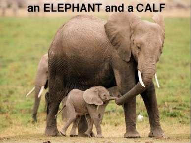an ELEPHANT and a CALF