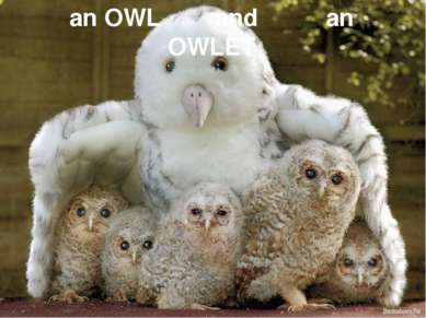 an OWL and an OWLET