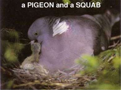 a PIGEON and a SQUAB