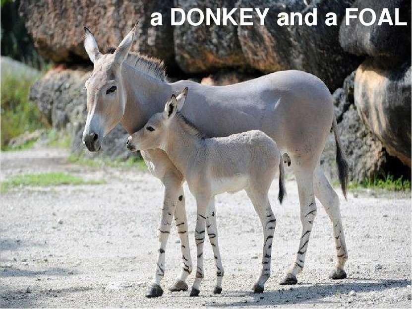 a DONKEY and a FOAL