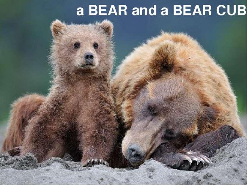 a BEAR and a BEAR CUB