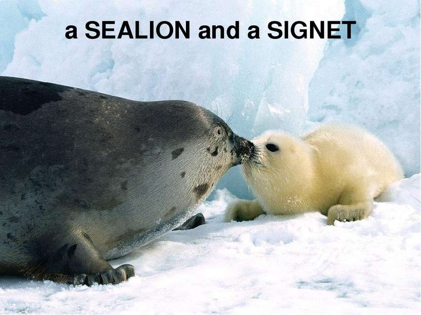 a SEALION and a SIGNET