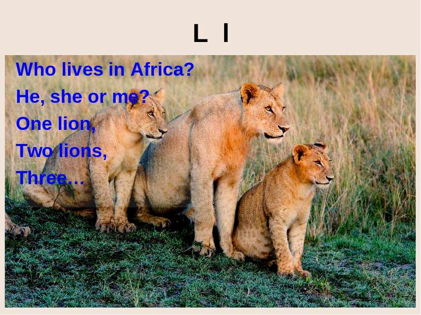 L l Who lives in Africa? He, she or me? One lion, Two lions, Three…