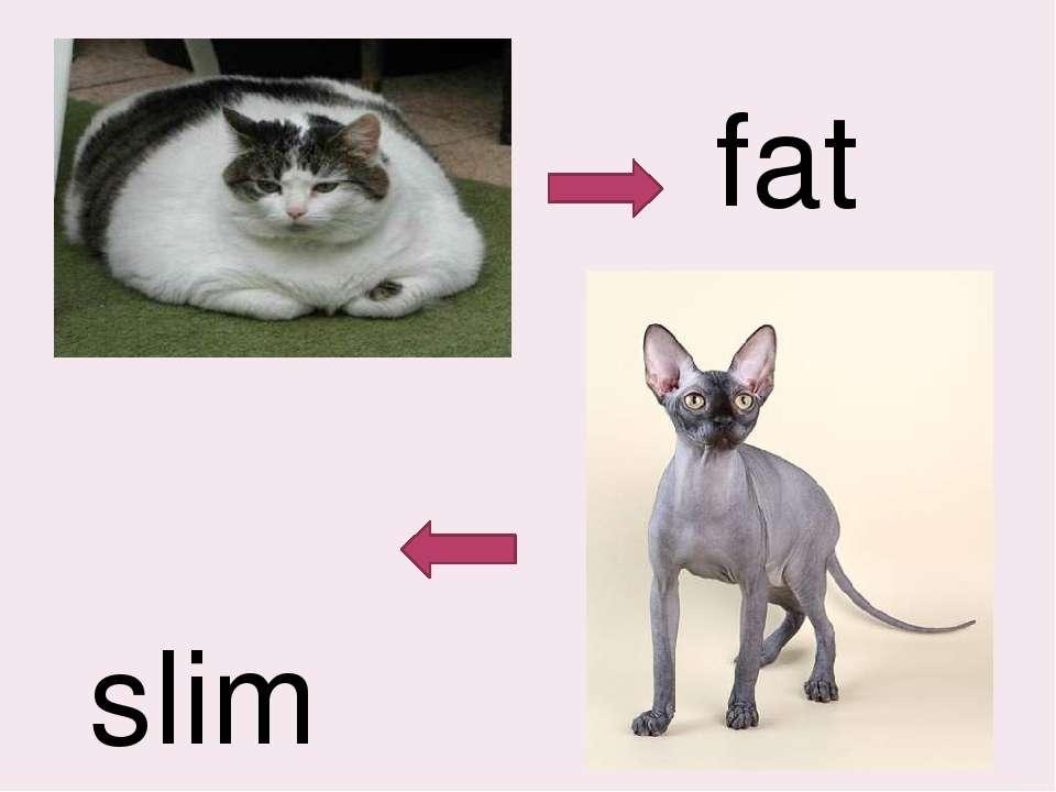 fat slim