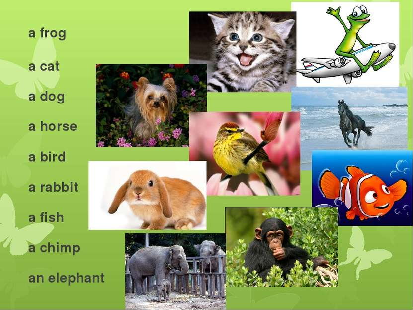 a frog a cat a dog a horse a bird a rabbit a fish a chimp an elephant