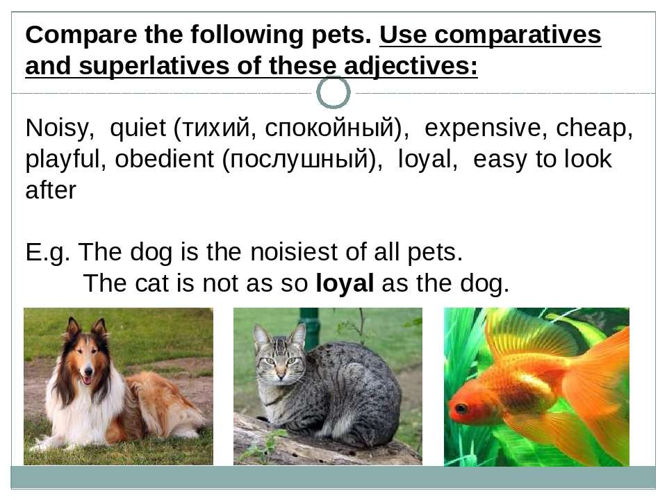 Сompare the following pets. Use comparatives and superlatives of these adject...