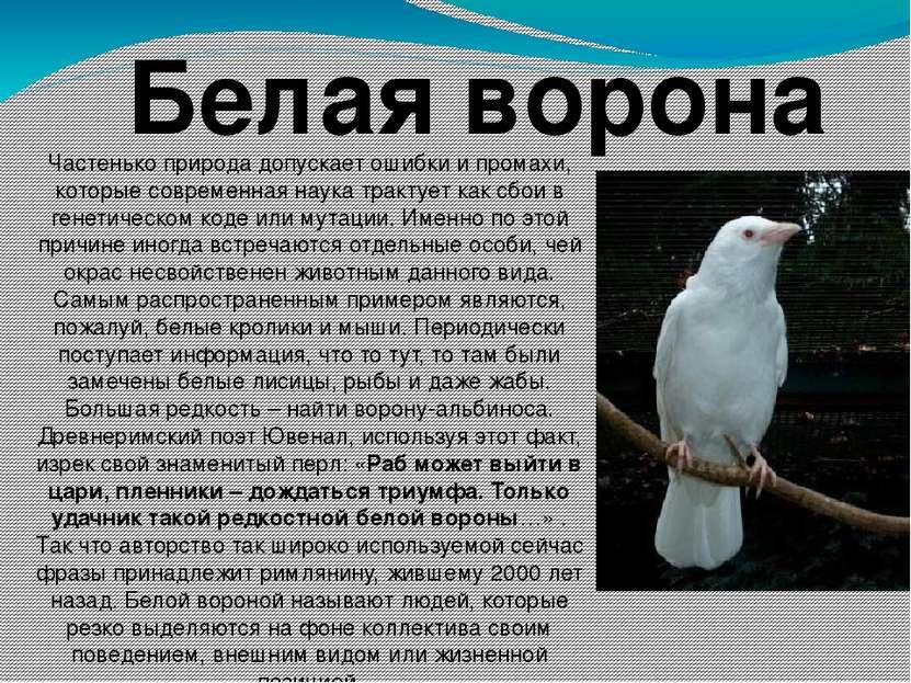Белая ворона Частенько природа допускает ошибки и промахи, которые современна...