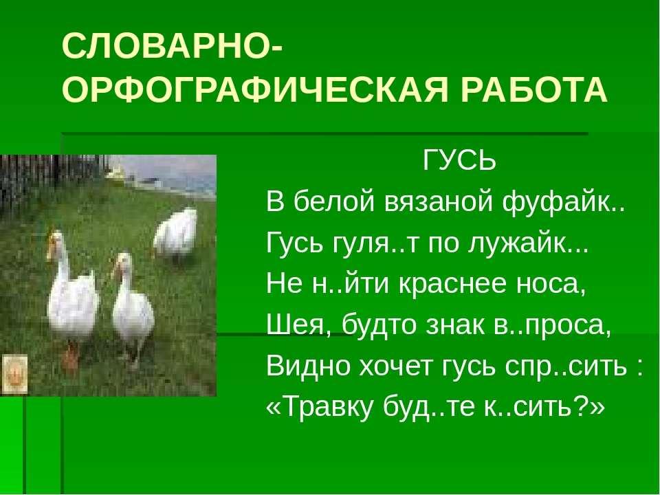 СЛОВАРНО-ОРФОГРАФИЧЕСКАЯ РАБОТА ГУСЬ В белой вязаной фуфайк.. Гусь гуля..т по...