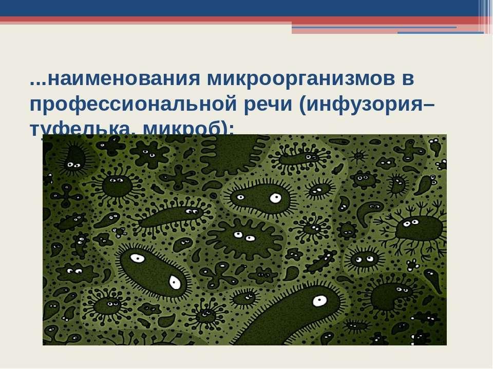 ...наименования микроорганизмов в профессиональной речи (инфузория–туфелька, ...