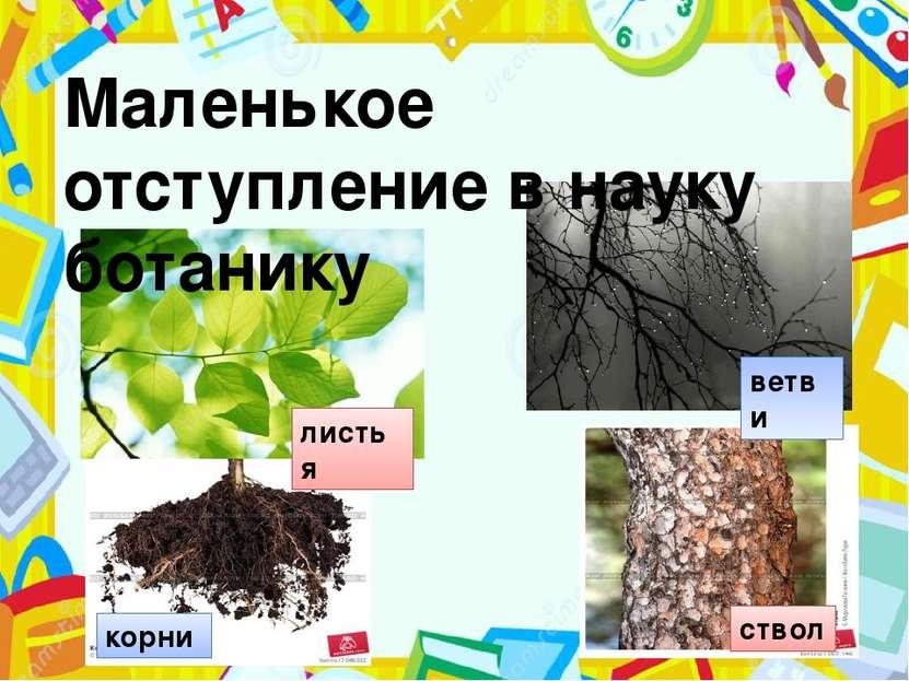 корни ствол листья ветви Маленькое отступление в науку ботанику Сейчас мы сде...