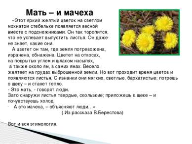«Этот яркий желтый цветок на светлом мохнатом стебельке появляется весной вме...