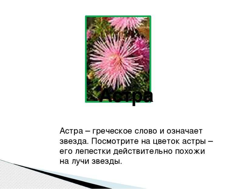Астра Астра – греческое слово и означает звезда. Посмотрите на цветок астры –...