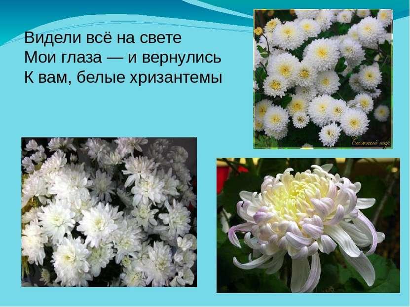Видели всё на свете Мои глаза — и вернулись К вам, белые хризантемы
