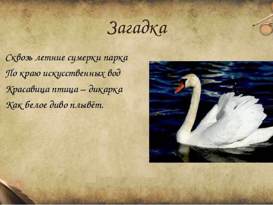Загадка Сквозь летние сумерки парка По краю искусственных вод Красавица птица...