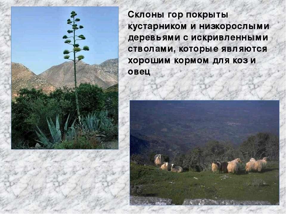 Склоны гор покрыты кустарником и низкорослыми деревьями с искривленными ствол...