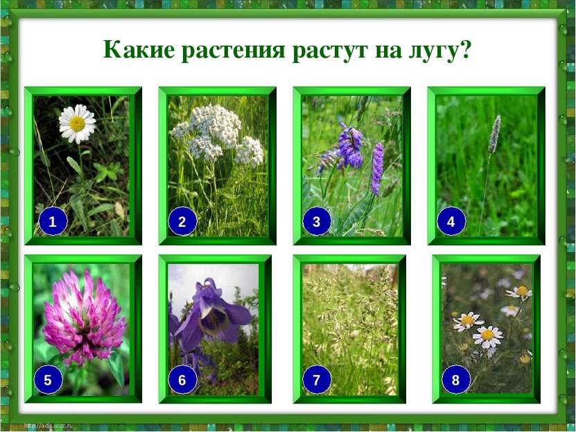 Какие растения растут на лугу? 7 6 2 5 3 4 8 1