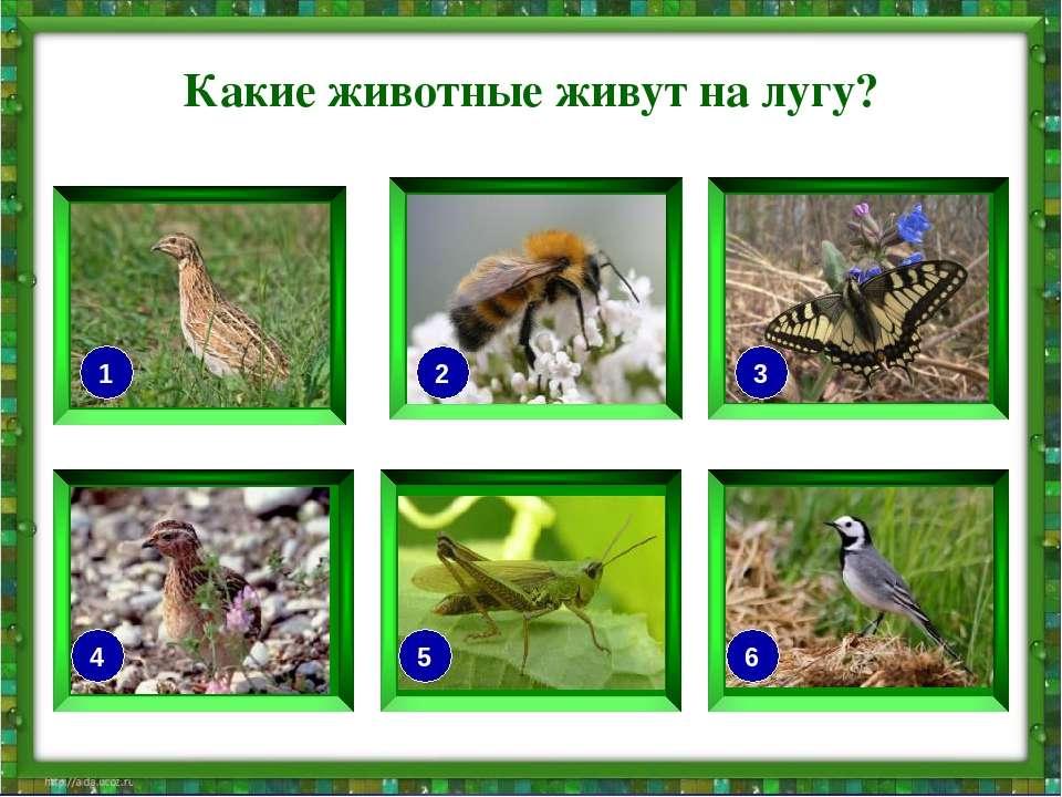 Какие животные живут на лугу? 1 3 2 4 5 6