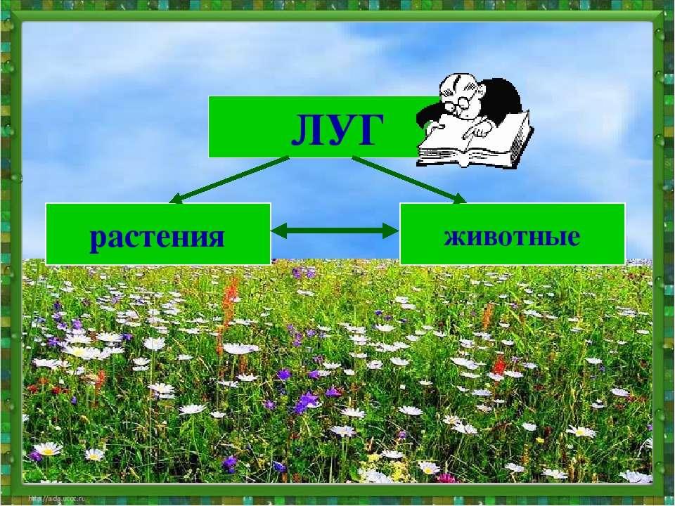 ЛУГ растения животные