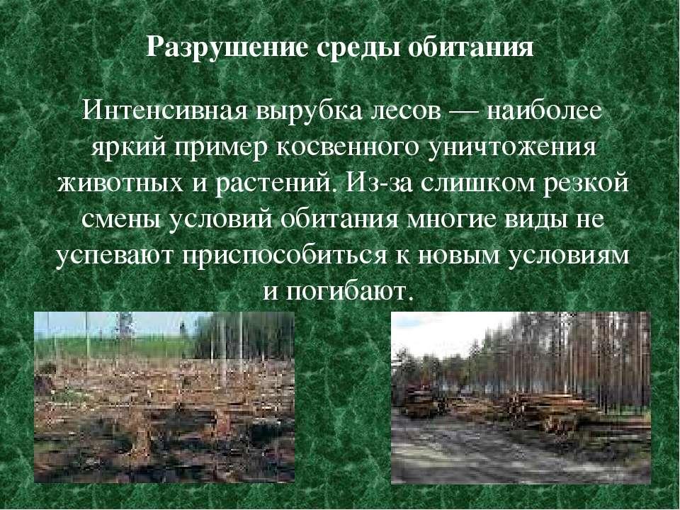 Разрушение среды обитания Интенсивная вырубка лесов — наиболее яркий пример к...