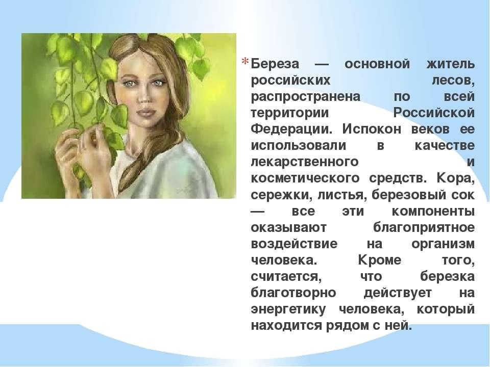 Береза — основной житель российских лесов, распространена по всей территории ...