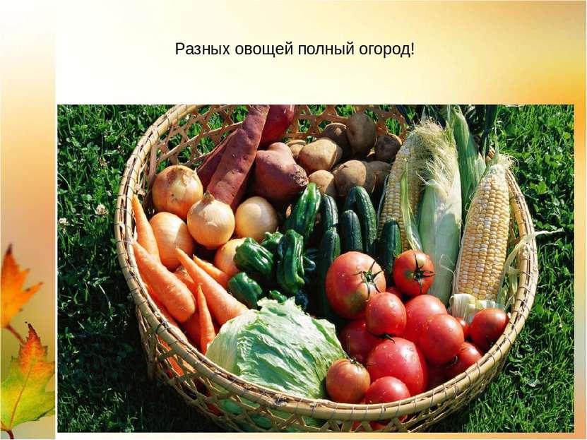 Разных овощей полный огород!