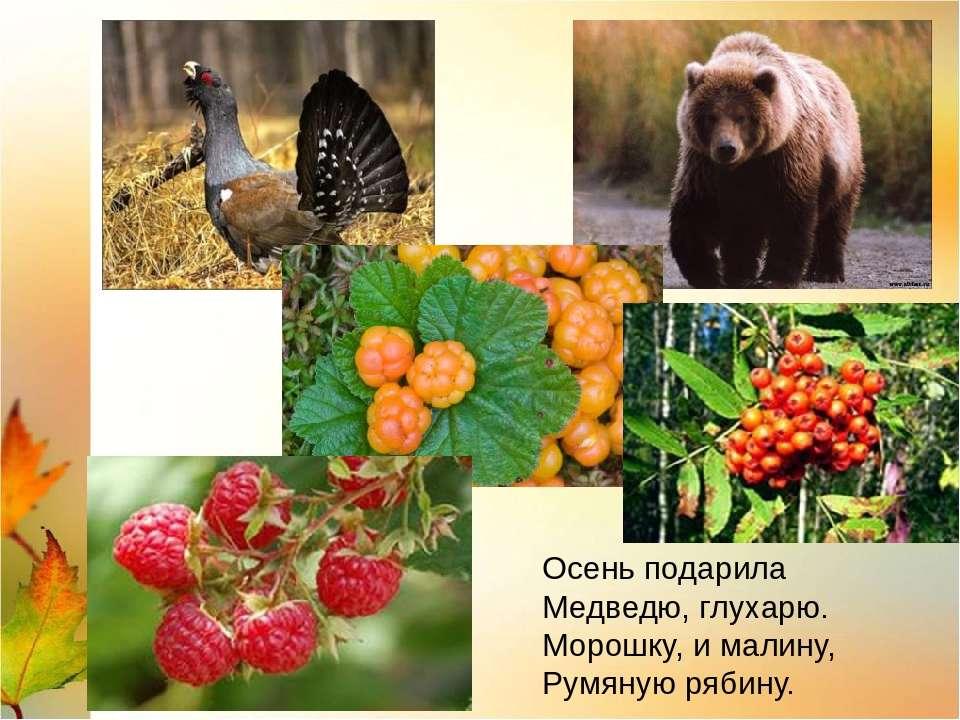 Осень подарила Медведю, глухарю. Морошку, и малину, Румяную рябину.