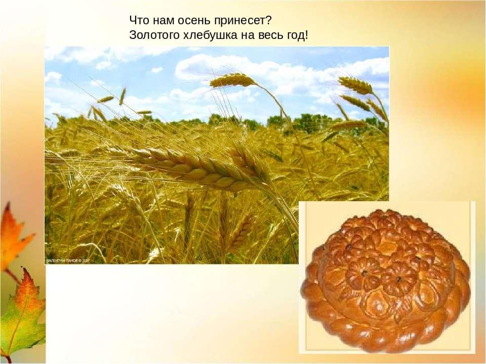 Что нам осень принесет? Золотого хлебушка на весь год!