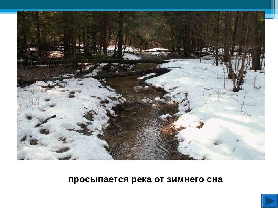 Ещё лежит снег, а зимующие птицы почувствовали приближение весны С грачами св...