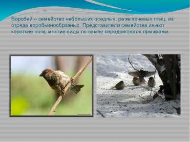 Воробей – семейство небольших оседлых, реже кочевых птиц, из отряда воробьино...