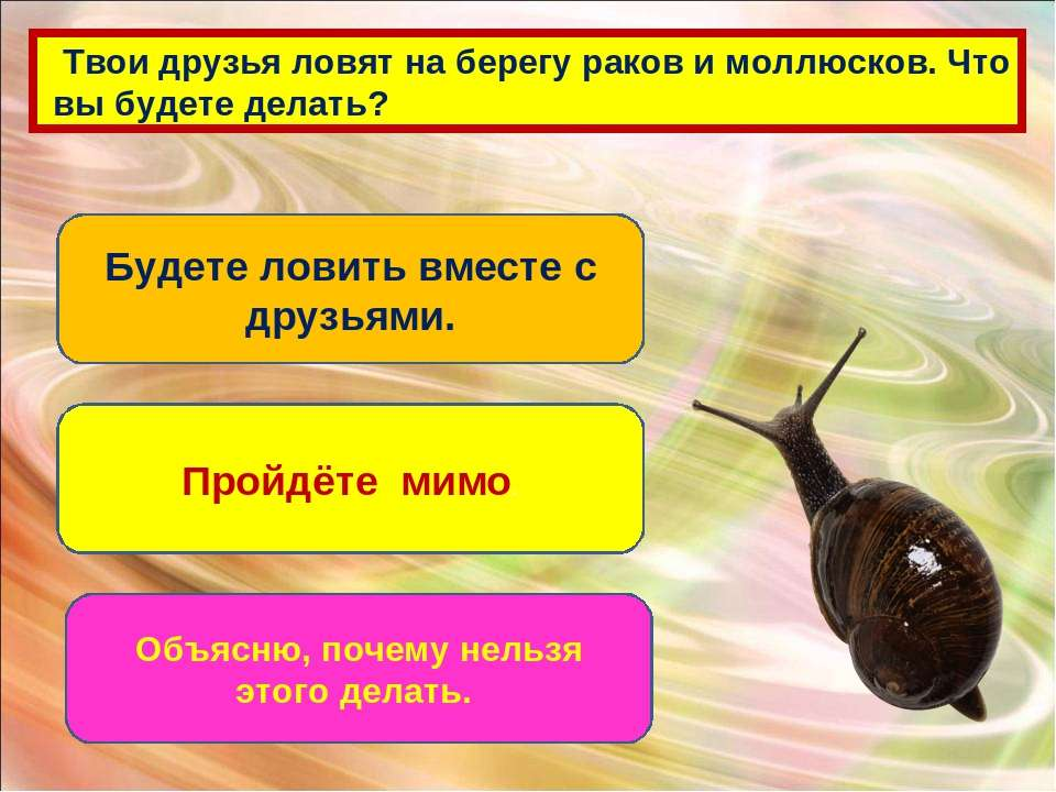 Твои друзья ловят на берегу раков и моллюсков. Что вы будете делать? Будете л...