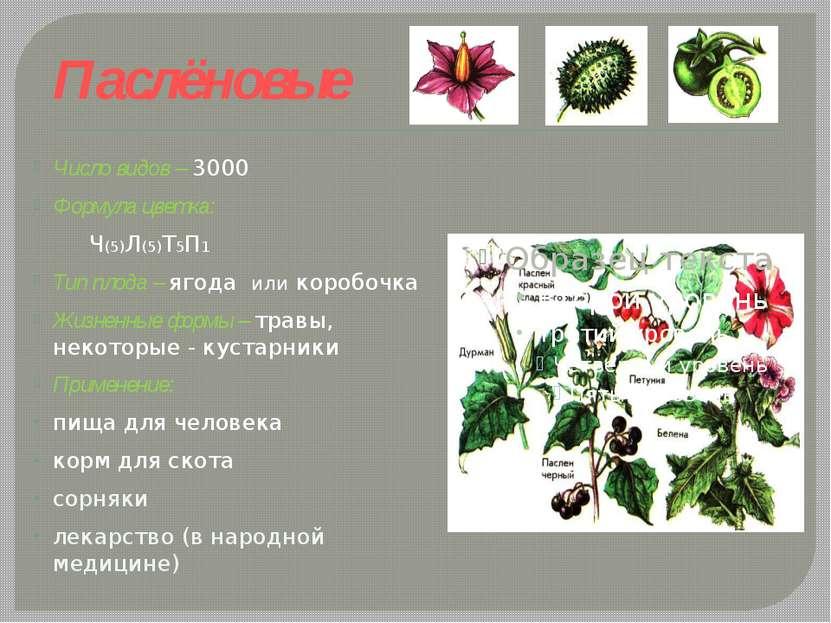 Паслёновые Число видов – 3000 Формула цветка: Ч(5)Л(5)Т5П1 Тип плода – ягода ...
