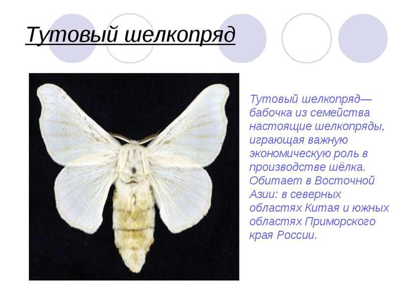 Тутовый шелкопряд края Тутовый шелкопряд— бабочка из семейства настоящие шелк...