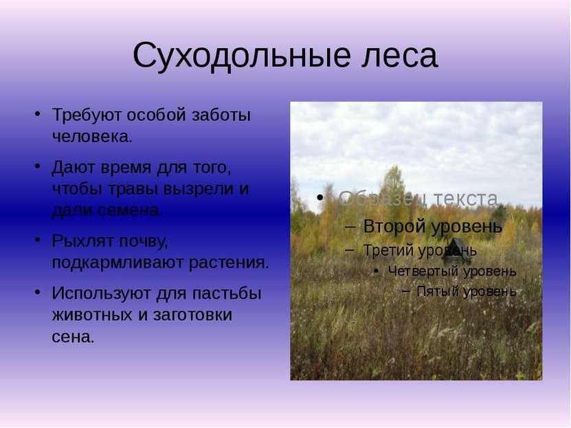 Суходольные леса Требуют особой заботы человека. Дают время для того, чтобы т...