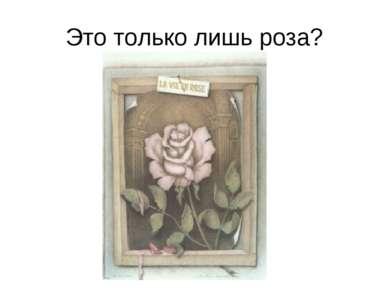 Это только лишь роза?