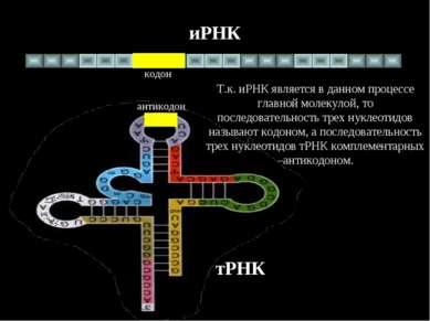 иРНК тРНК антикодон кодон Т.к. иРНК является в данном процессе главной молеку...
