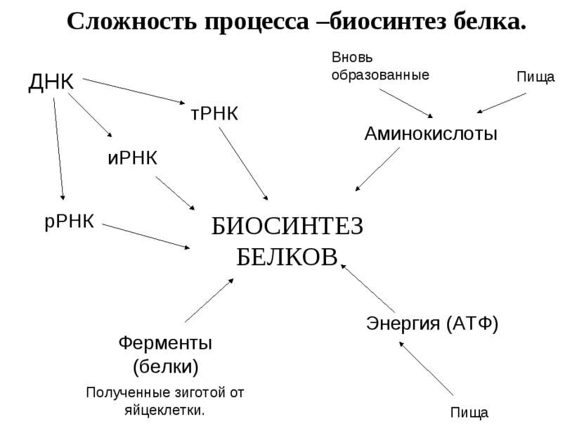 БИОСИНТЕЗ БЕЛКОВ тРНК иРНК Аминокислоты Энергия (АТФ) Ферменты (белки) рРНК Д...