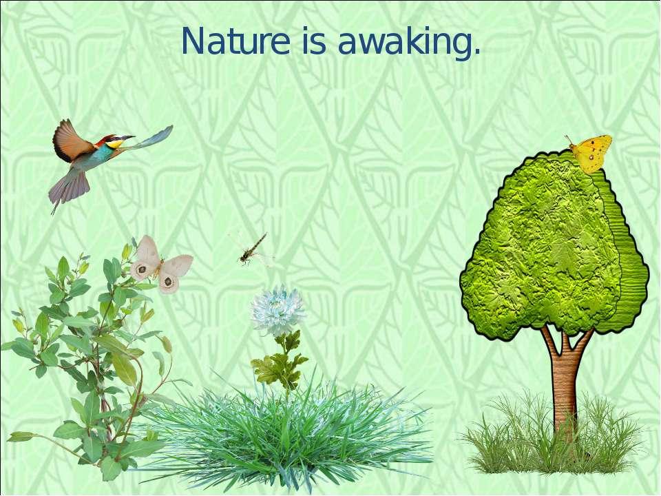 Nature is awaking.