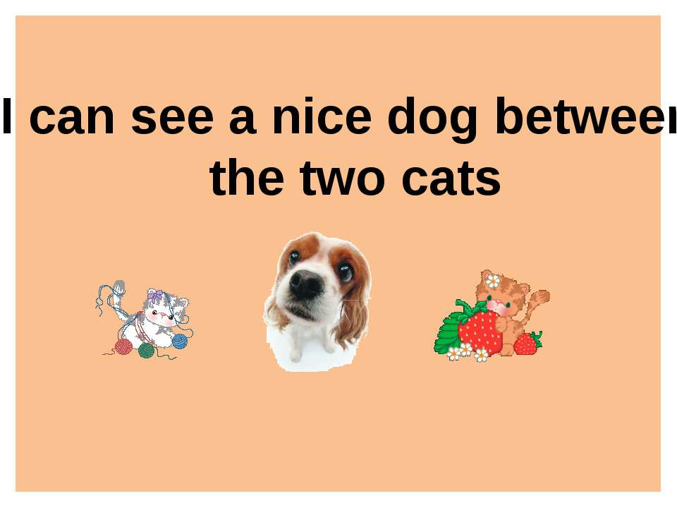 I can see a nice dog between the two cats