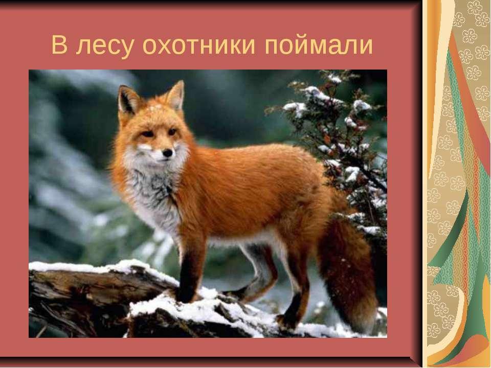 В лесу охотники поймали