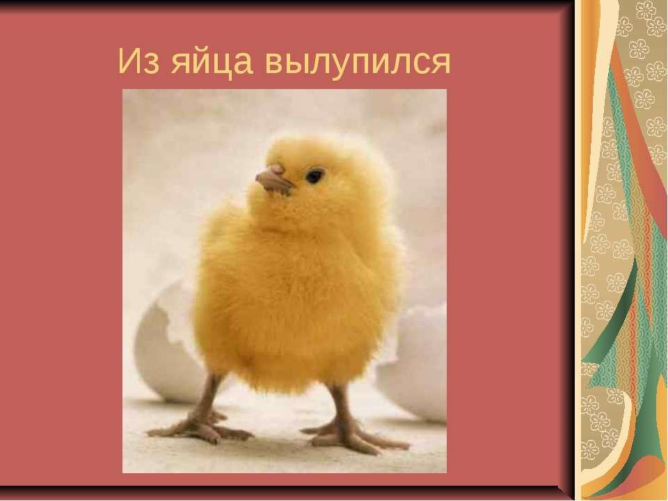 Из яйца вылупился