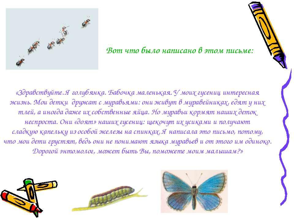 «Здравствуйте. Я голубянка. Бабочка маленькая. У моих гусениц интересная жизн...