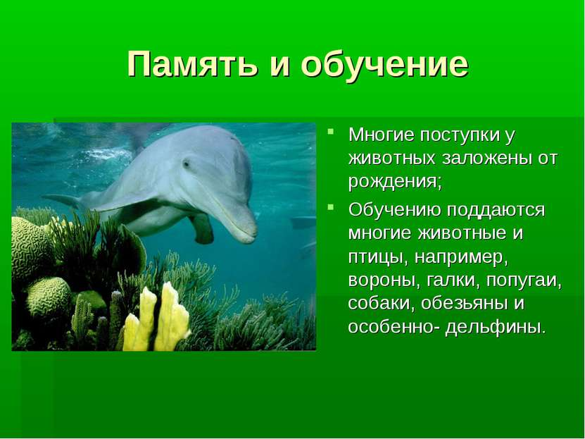 Память и обучение Многие поступки у животных заложены от рождения; Обучению п...