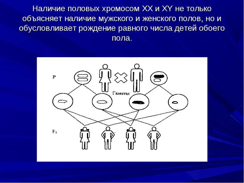 Наличие половых хромосом XX и XY не только объясняет наличие мужского и женск...