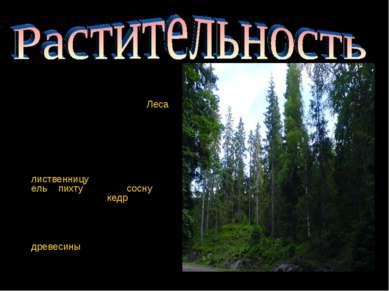 Площадь лесного фонда Красноярского края составляет 168,1млн га. Леса покрыв...
