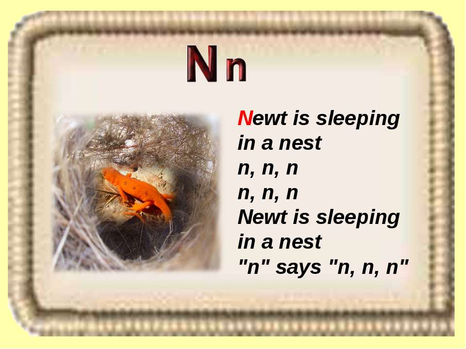 "Newt is sleeping in a nest n, n, n n, n, n Newt is sleeping in a nest ""n"" say..."