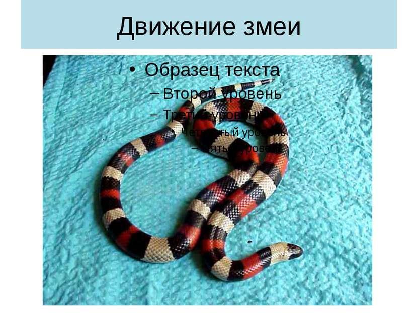 Движение змеи