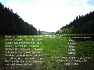папапап Деревья являются основными составляющими леса. В нашем районе леса ра...