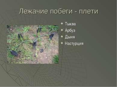 Лежачие побеги - плети Тыква Арбуз Дыня Настурция
