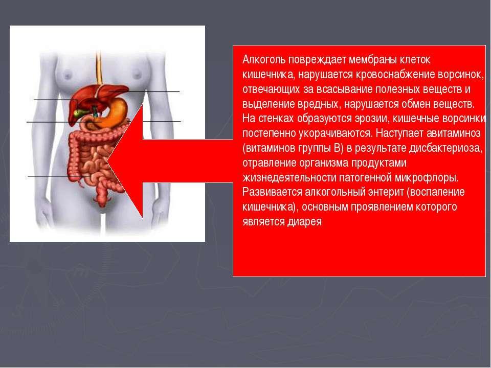 Алкоголь повреждает мембраны клеток кишечника, нарушается кровоснабжение ворс...